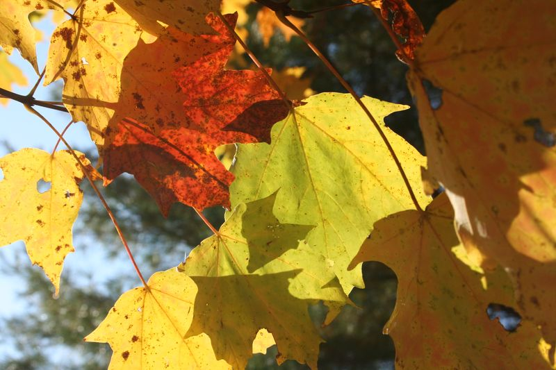 More Autumn photos 020
