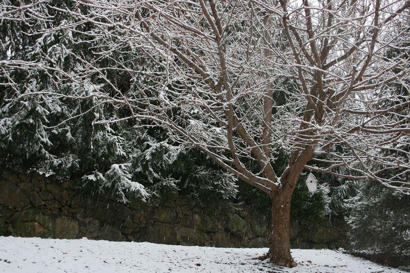 Snowy days 148