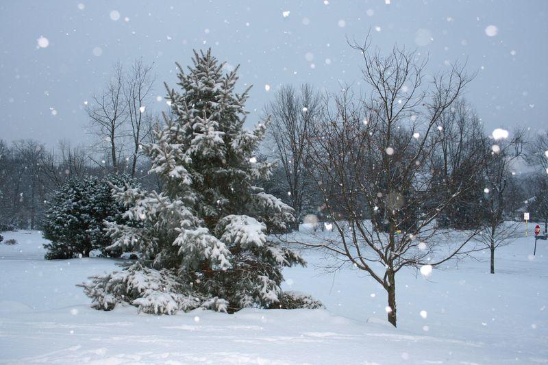 Winter 087