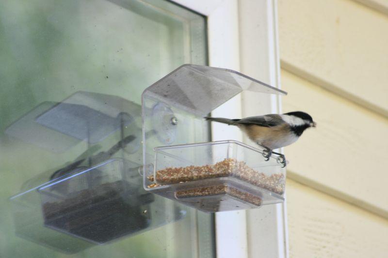 Birdfeeder 025