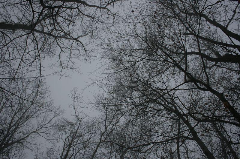 Winter 318