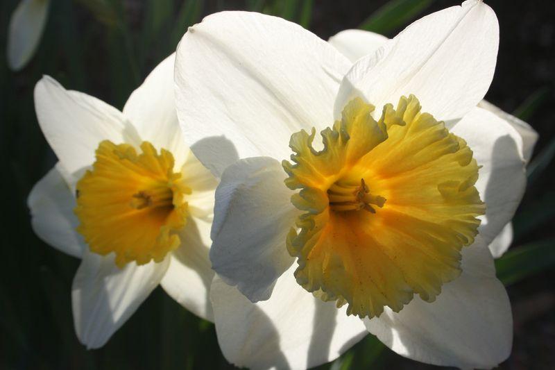 Spring 024