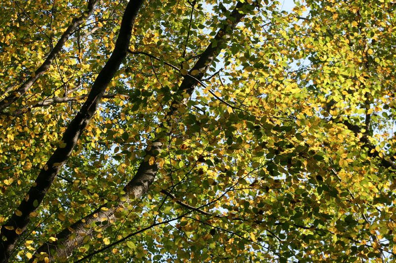 Autumn photos 013