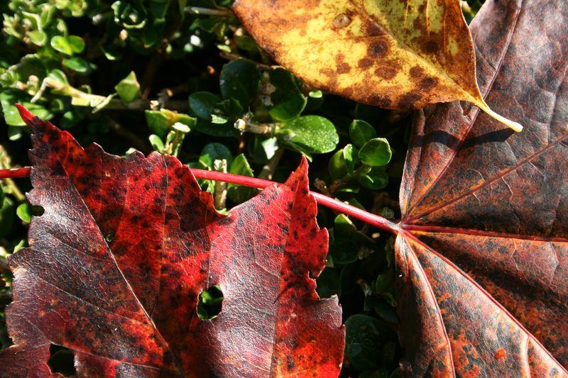 More Autumn photos 055