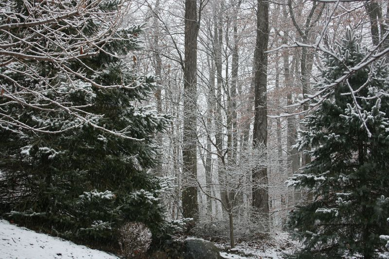 Snowy days 149