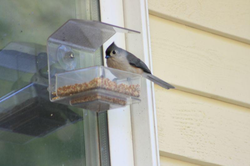Birdfeeder 033