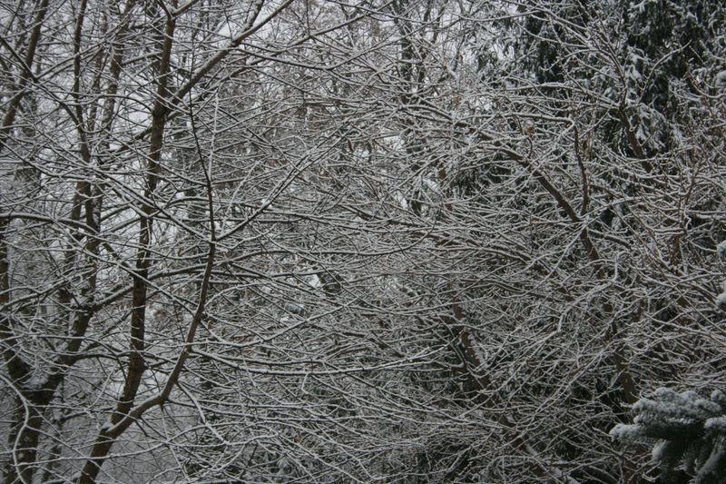 Snowy days 099