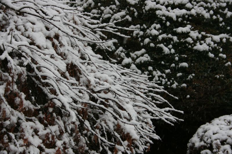 Snowy days 201