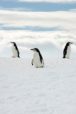 Tatiana Botton-penguins 1
