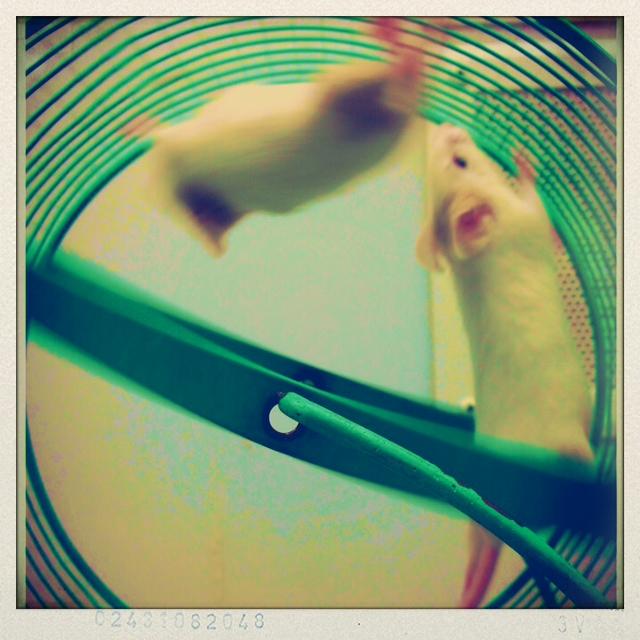 Mouse wheel 5