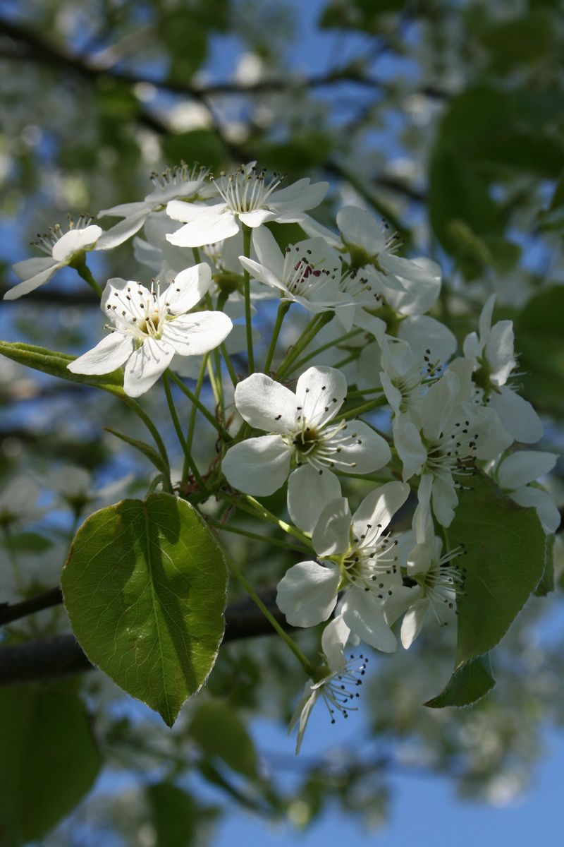Springtime 050