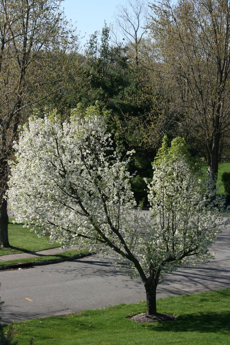 Springtime 040