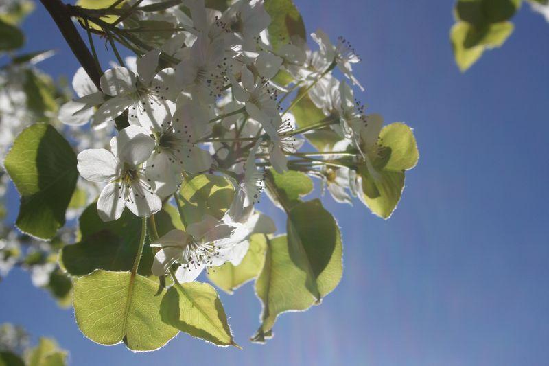 Springtime 062