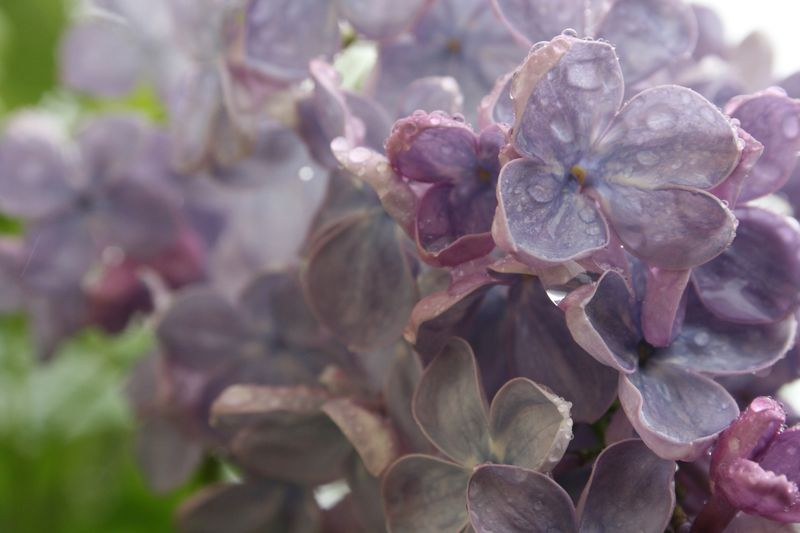 Blooming 083