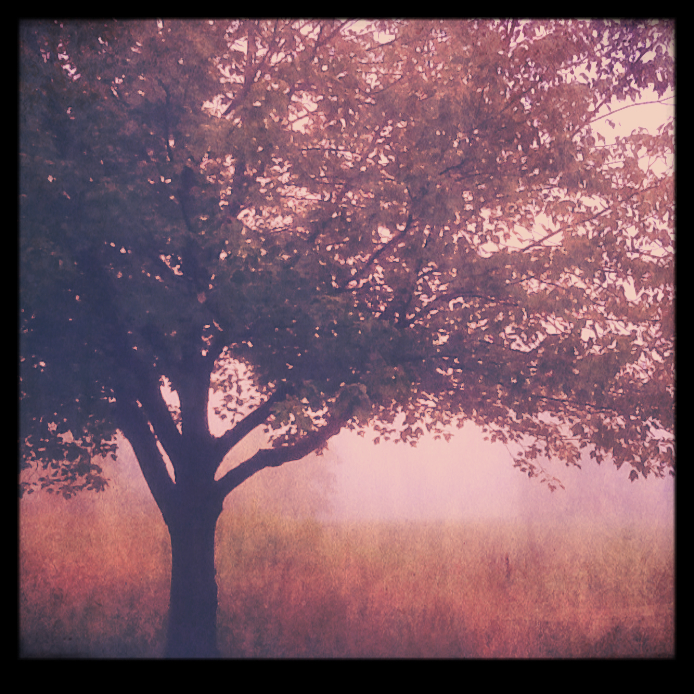 Tree with vintage filter 2