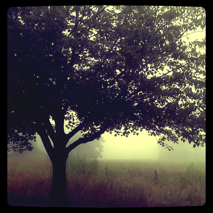 Tree with vintage filter 1