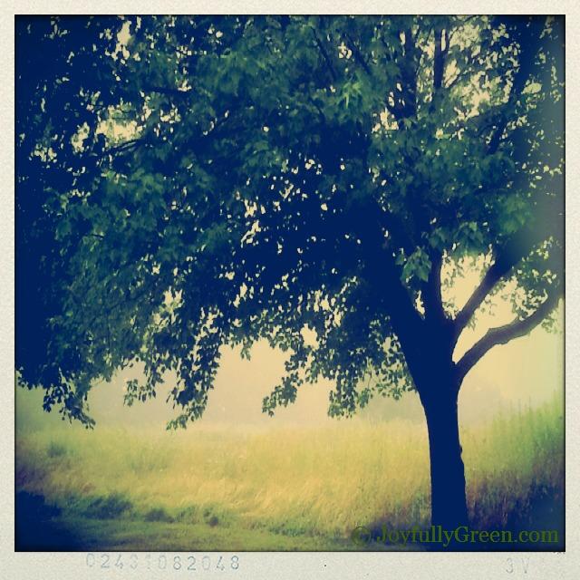 TreeInField2