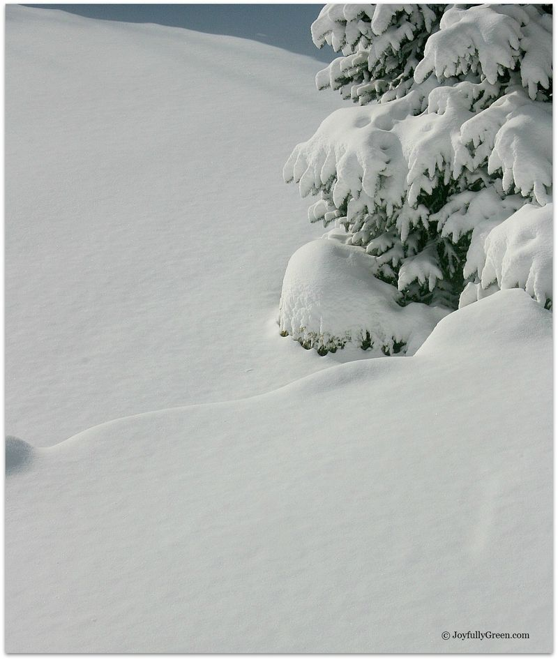Snow 037D