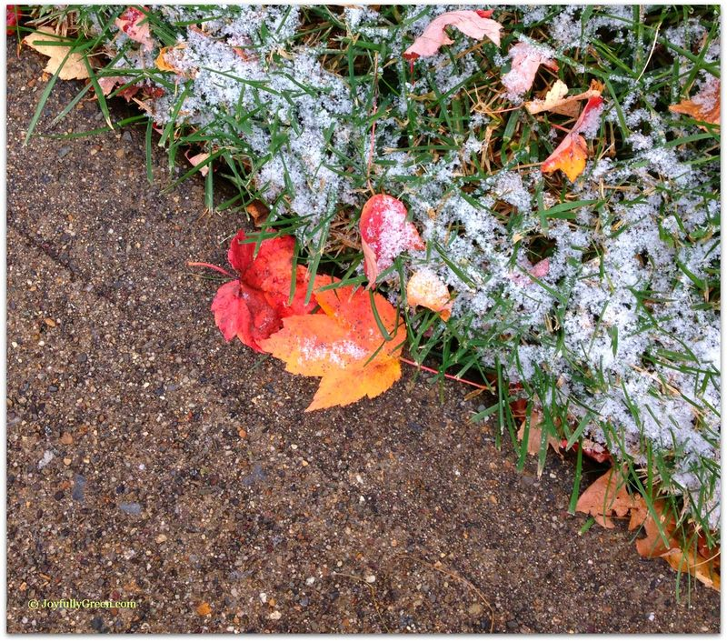 Pink leaves in snow2a