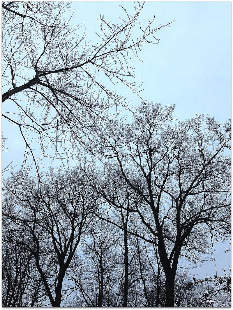 Branches 3a