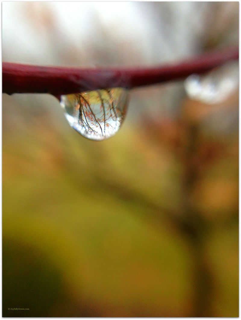 Tree in a Raindrop