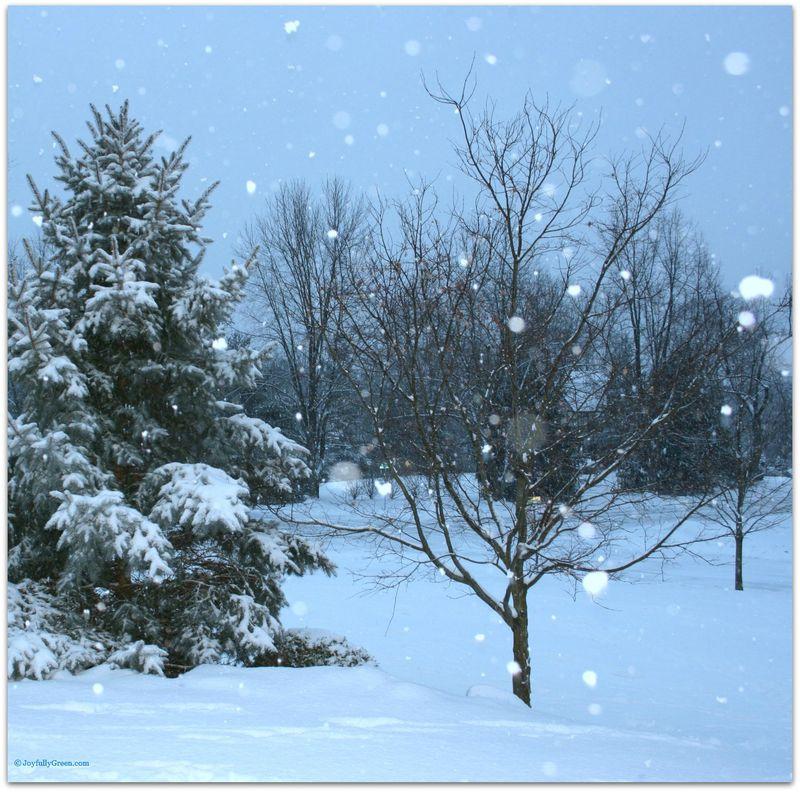 WinterSnow2