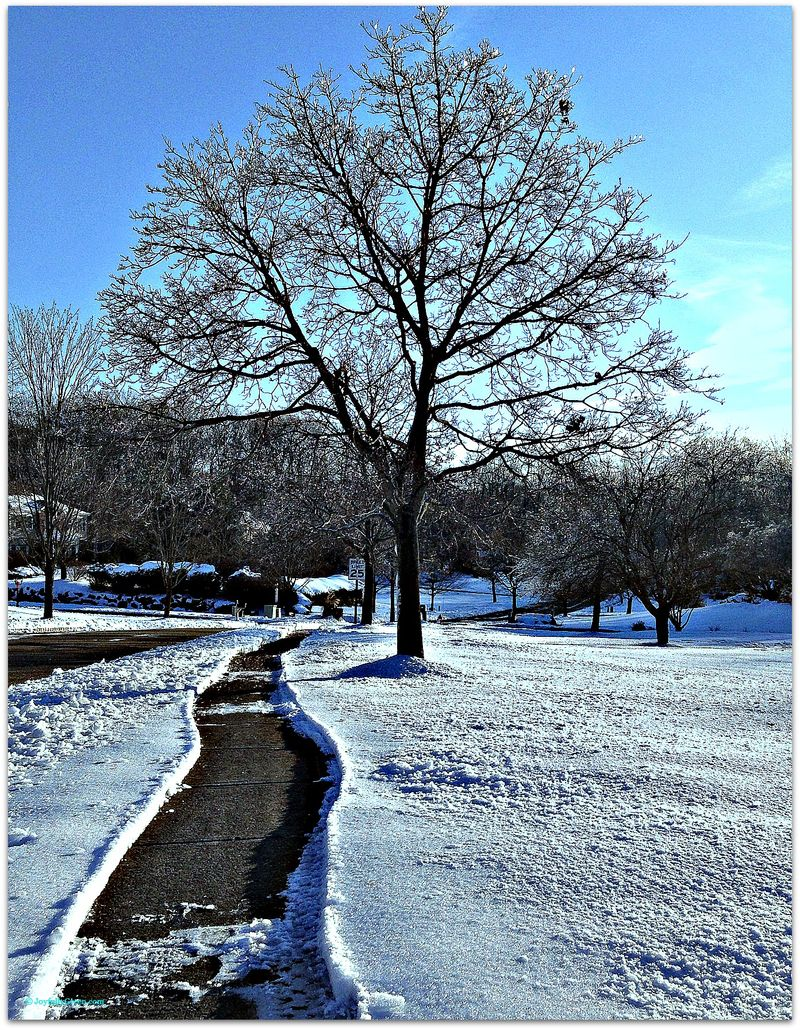Snow shoveled path 2a