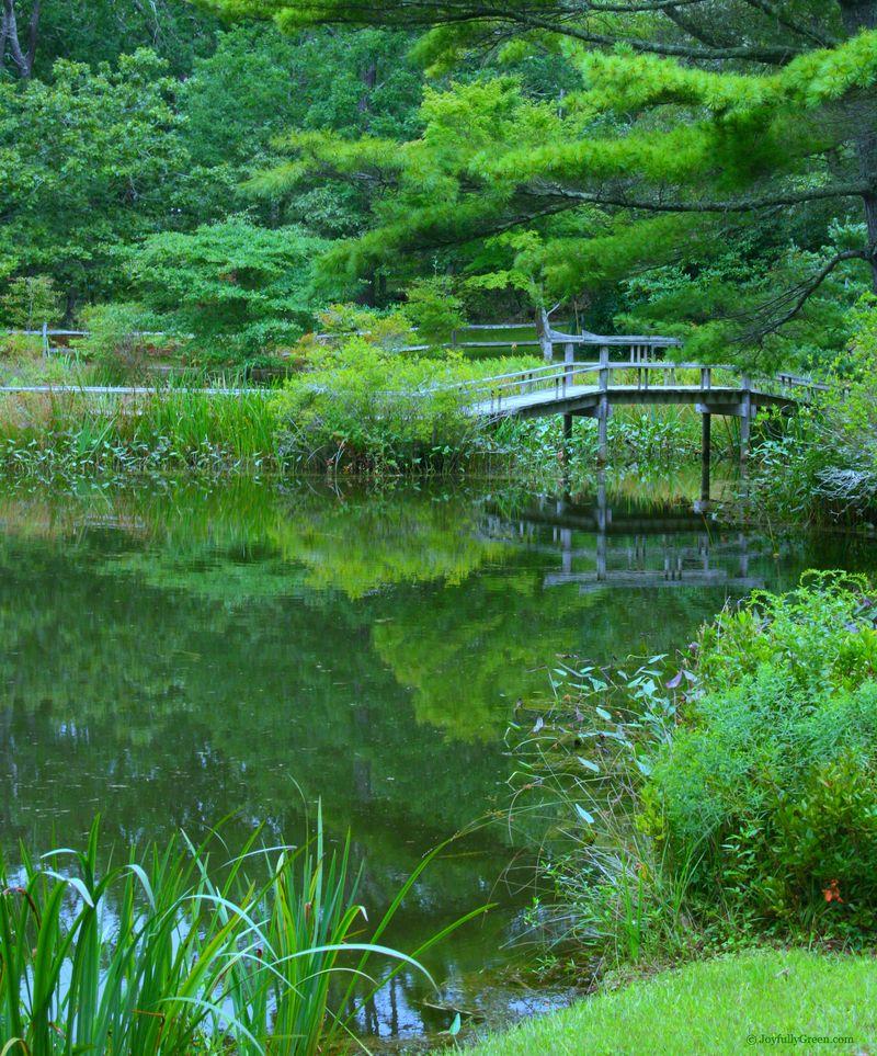 Japanese Bridge in Forest