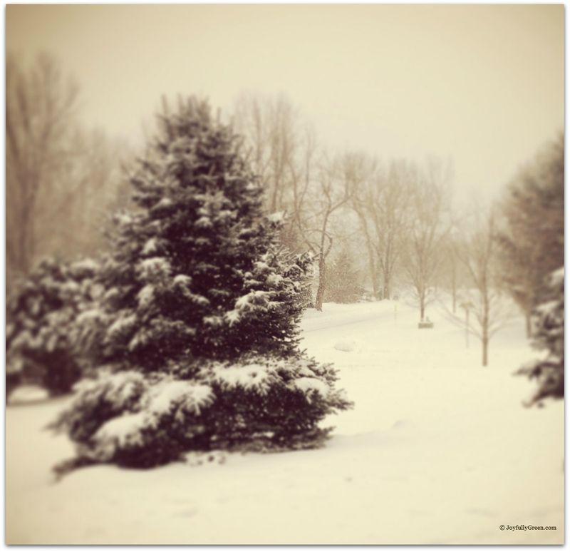 Narnia Yard2