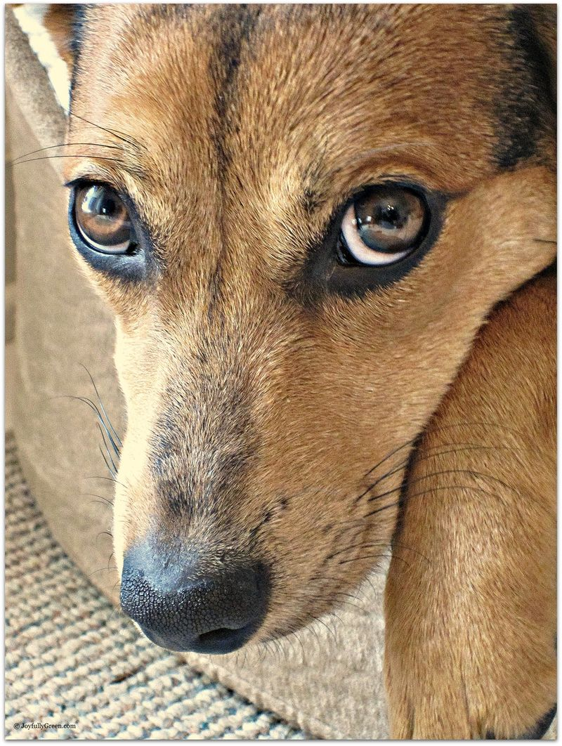 Dog Portrait-C