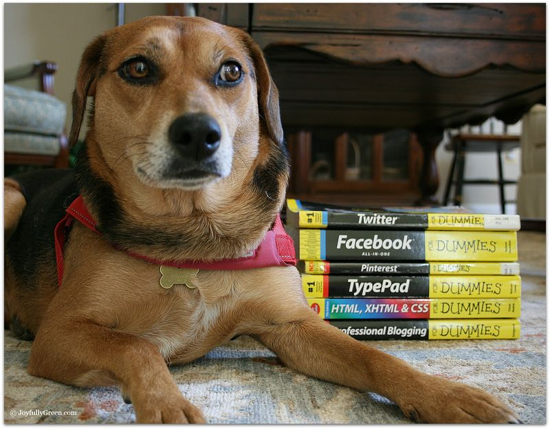 DogandBooks 3