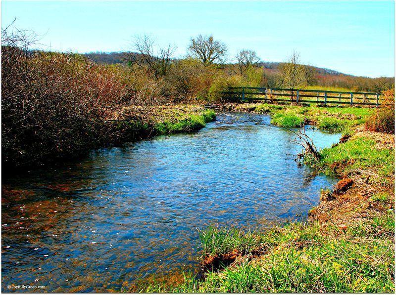 Spring Brook 1