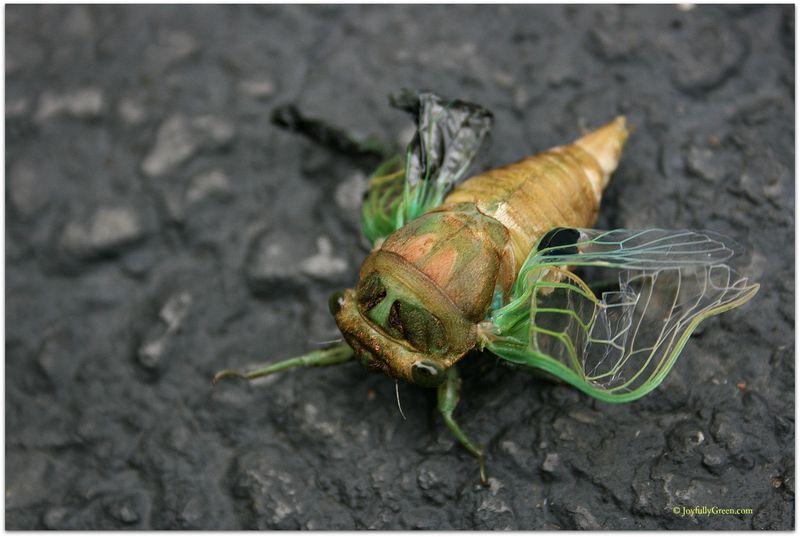 Big Bug © Joyfully Green