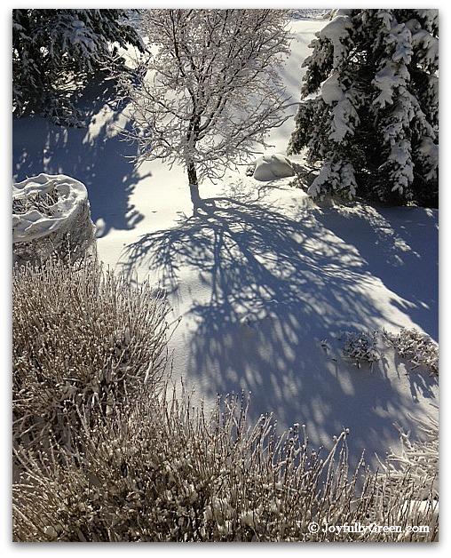 Snow Shadows 2-a