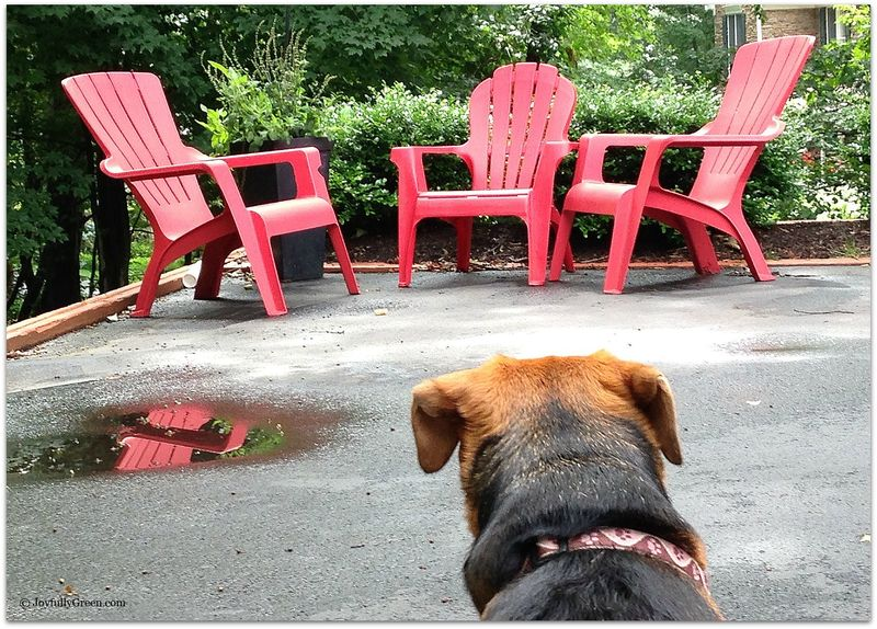 Dog with red chairs 2