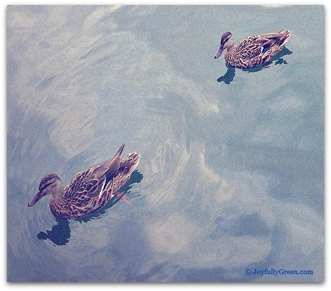 TwoDucks