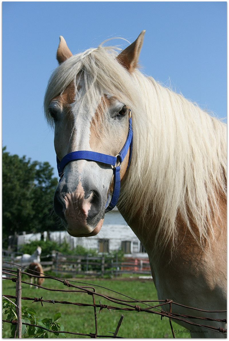 Horse © JoyfullyGreen