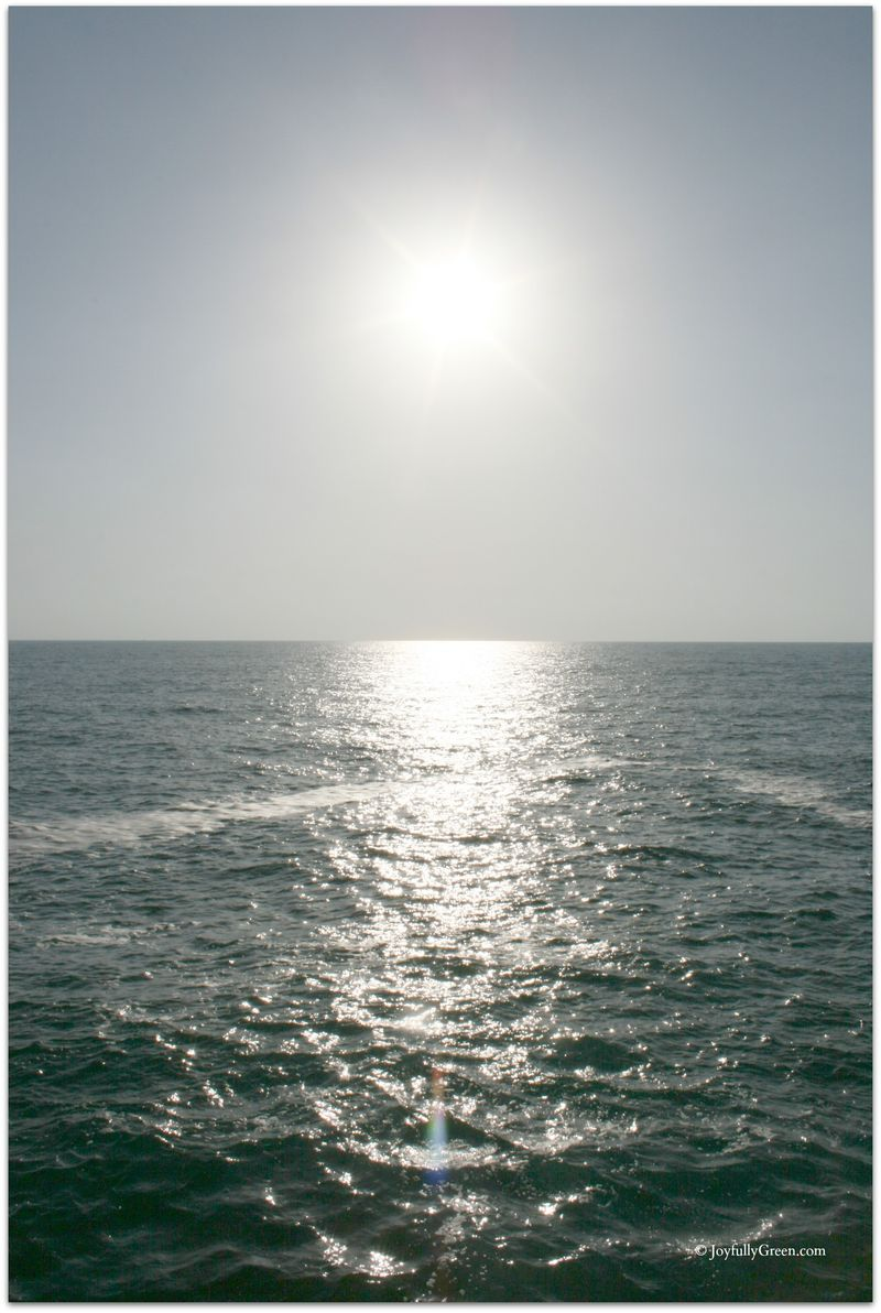 Serene Sea © Joyfully Green