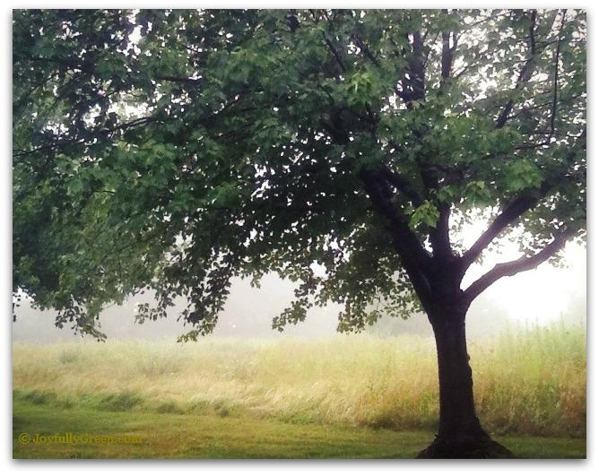 Tree in Morning-C