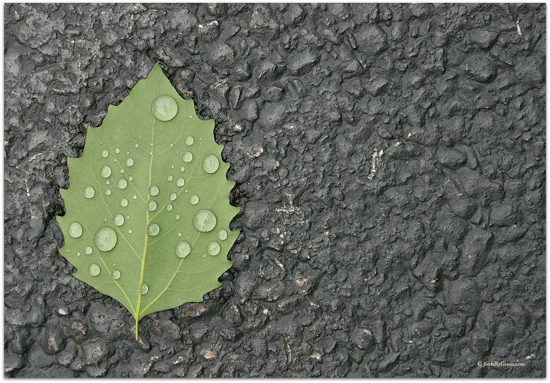 Leaf on driveway JGC