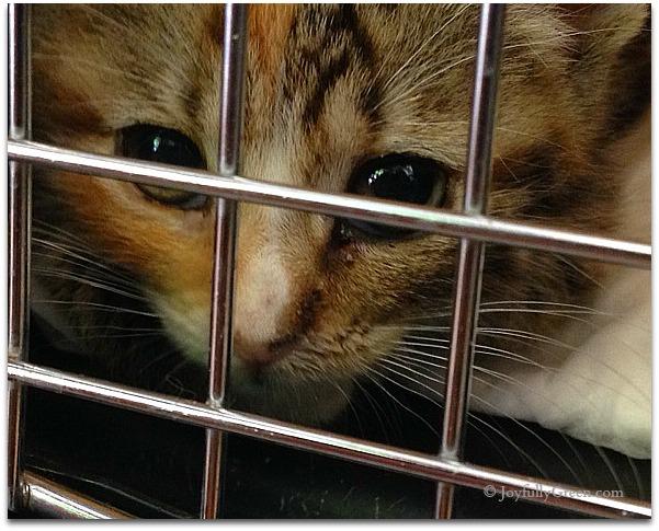 Kitten for Adoption by JGC