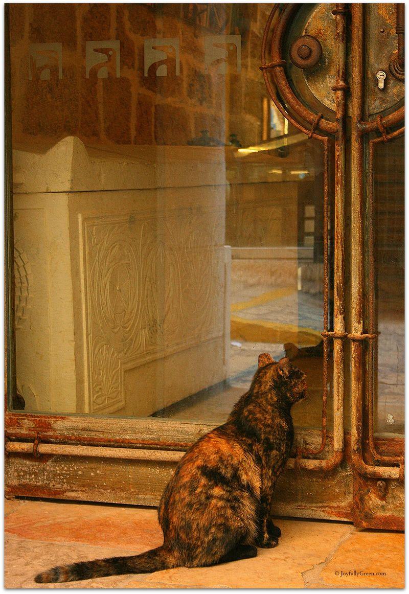 Shop Cat © JoyfullyGreen