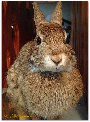Bruce Museum Bunny © JoyfullyGreen