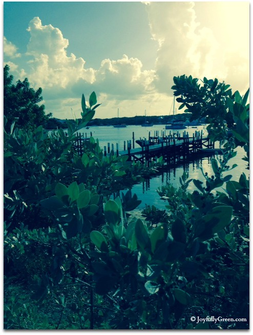 Bahamas Dock © Joyfully Green