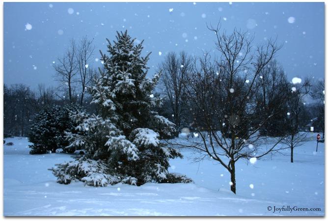 Snowfall © JoyfullyGreen