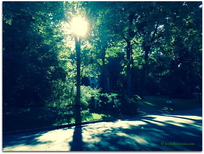 Morning © Joyfully Green