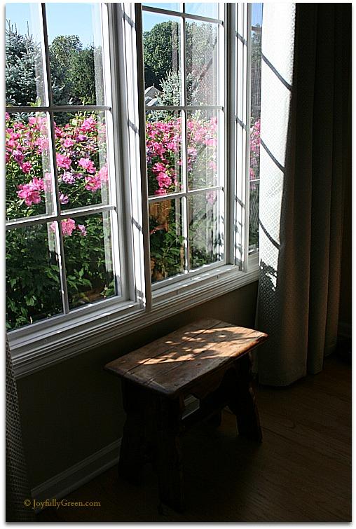View of Roses © Joyfully Green