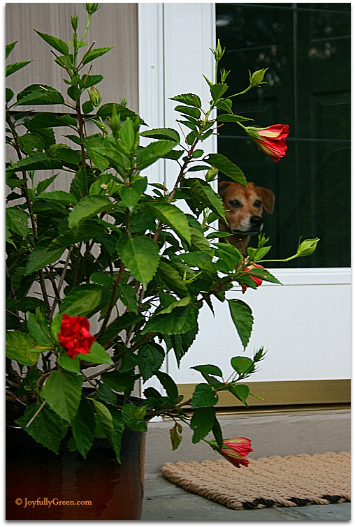 Dog and Flowers © Joyfully Green