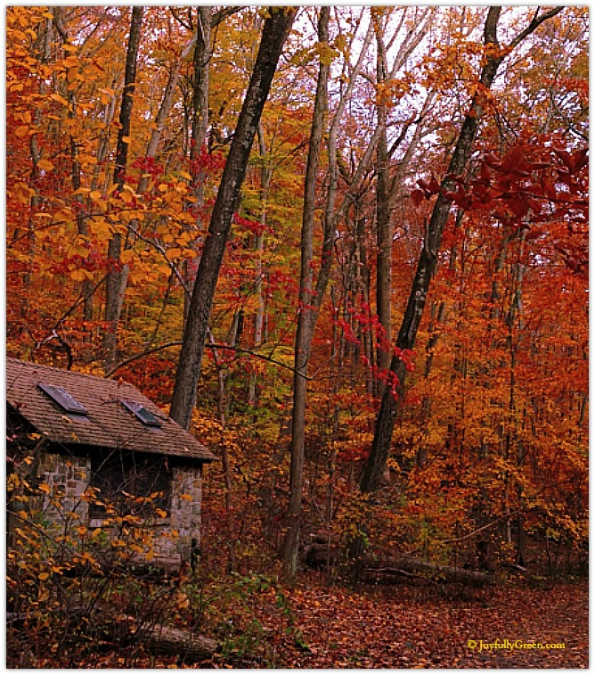 Autumn Shed © Joyfully Green