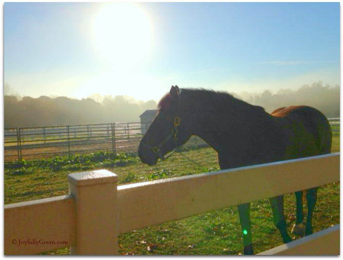 Horse in Morning © Joyfully Green